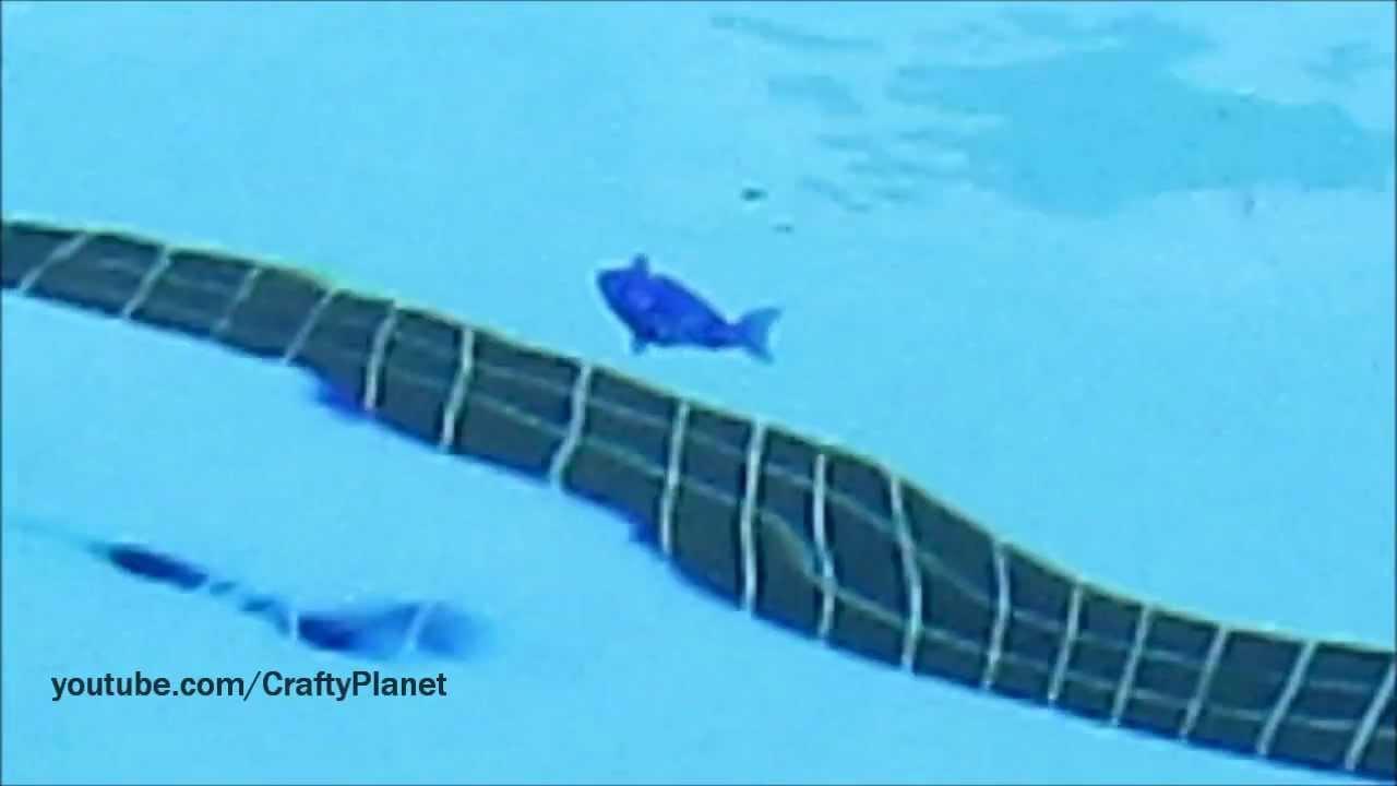 Hex bug aquabot fish swimming pool test review micro for Swimming pool fish