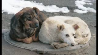 Социальный ролик про бездомных собак автор Миненков Антон