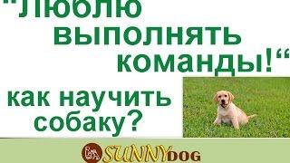 Собаке нравится слушаться! как научить собаку любить выполнять команды