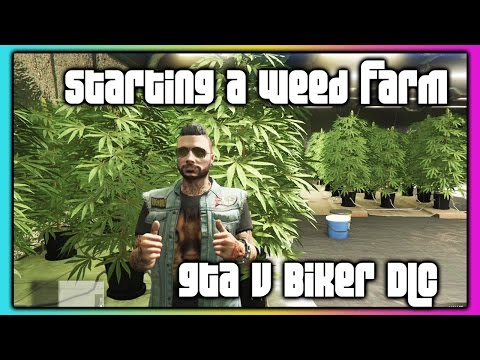 GTA 5 Online :: Biker DLC :: Starting A Weed Farm