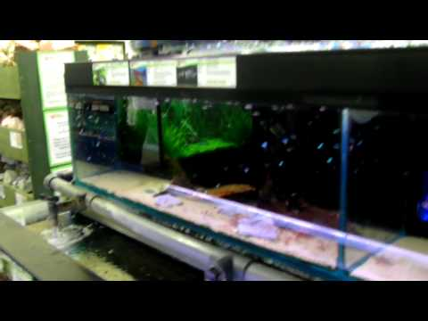 Aquarium Shop High quality and size~1