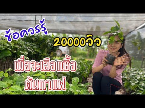 เทคนิคการเลือกซื้อต้นกาแฟ สำหรับมือใหม่ สนใจต้นกาแฟโทร088-3197922 :MJ Farm channel by ไฝดำ