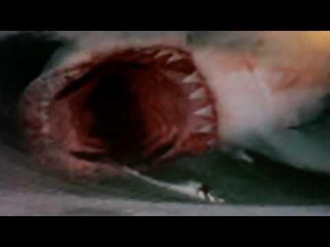 megalodon shark attacks surfer off the coast of hawaii ...
