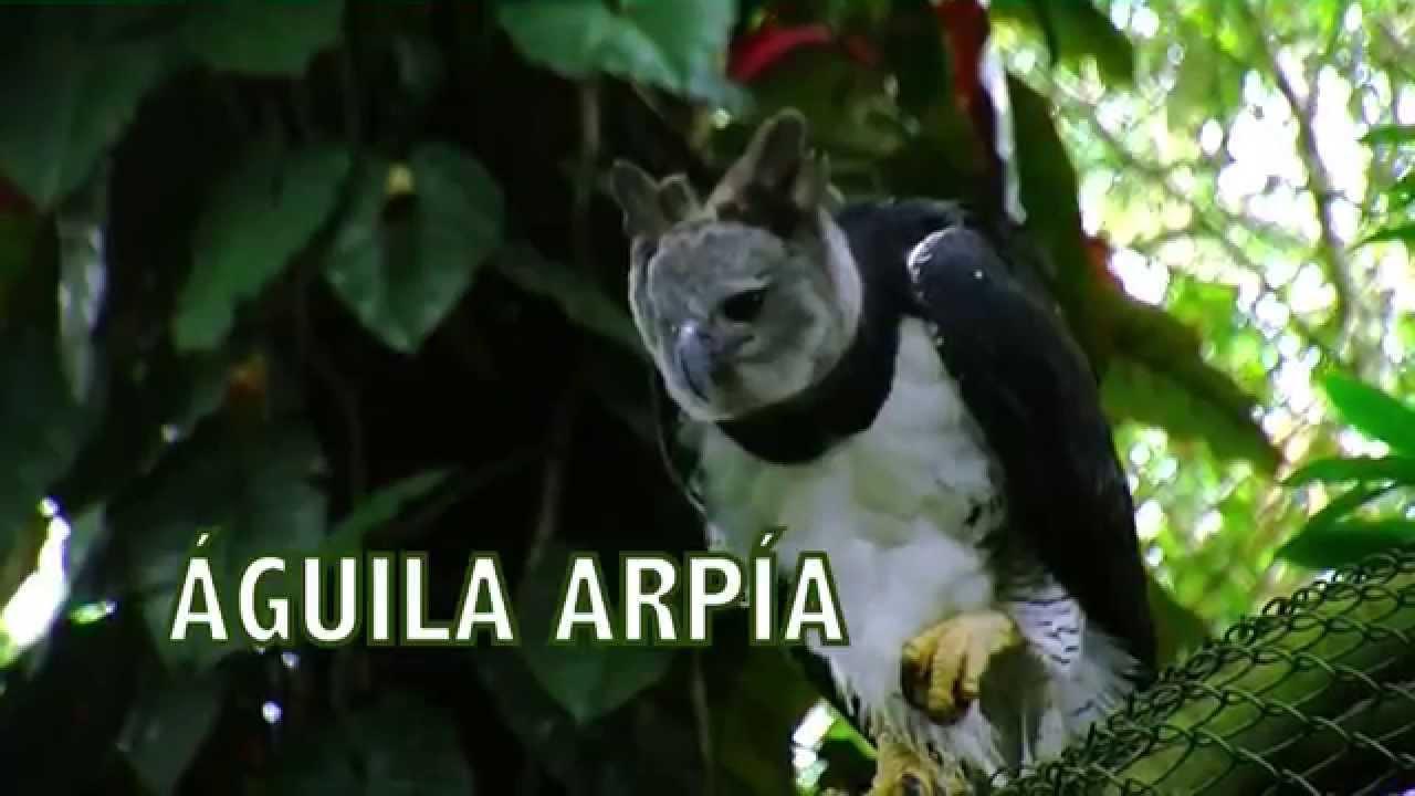 Aves Grandes - TvAgro por Juan Gonzalo Angel - YouTube