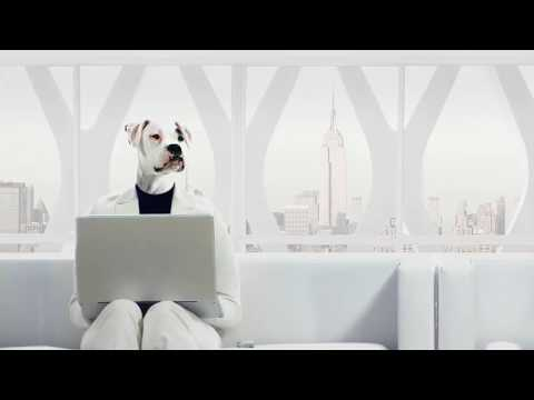 The Donald POV Financial Foundation - GQ Puppy