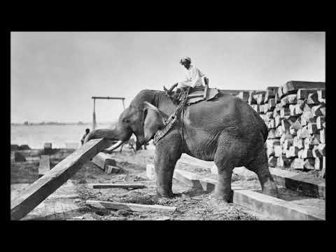 Lied Vom Achten Elefanten / Paul Dessau