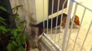 Beagle Escape