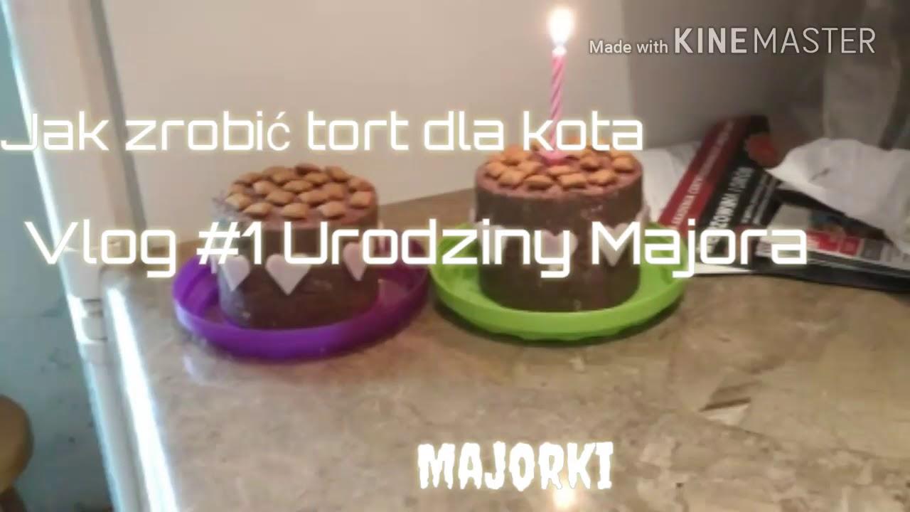 Jak Zrobić Tort Dla Kota Urodzinki Majora Majorki Youtube