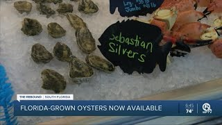 Florida-grown oysters now available at area restaurants
