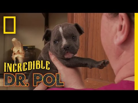 Puppy Love  The Incredible Dr. Pol