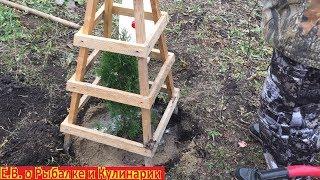 Как подготовить хвойные растения к зиме.Как подготовить хвойные саженцы к первой зиме.