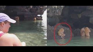 Turistas Graban Criatura Ancestral En Tailandia