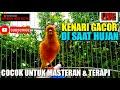 Live Kenari Gacor Disaat Hujan Cocok Untuk Masteran Terapi  Mp3 - Mp4 Download
