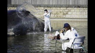 Un cachalote en Madrid con CiudaDistrito