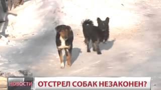 Хабаровск. Собаки под защитой