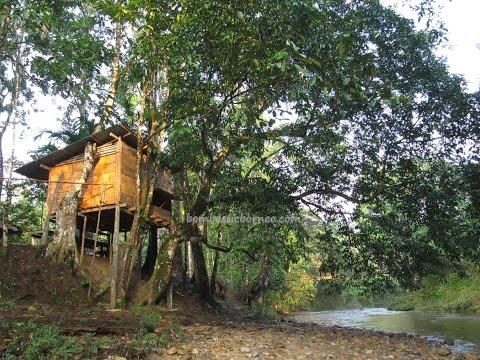 Jungle Resort at Kampung (Village) Tringgus, Kuching Sarawak Malaysia