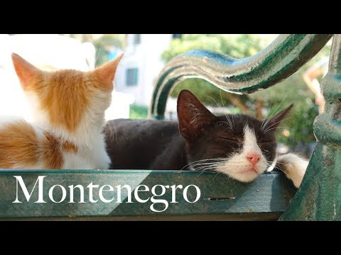 Cats Everywhere in Kotor (Montenegro)