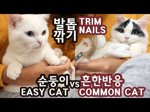 고양이 발톱깎기: 순둥이 vs 보통반응 CAT NAIL TRIMMING: EASY KITTY vs COMMON REACTION