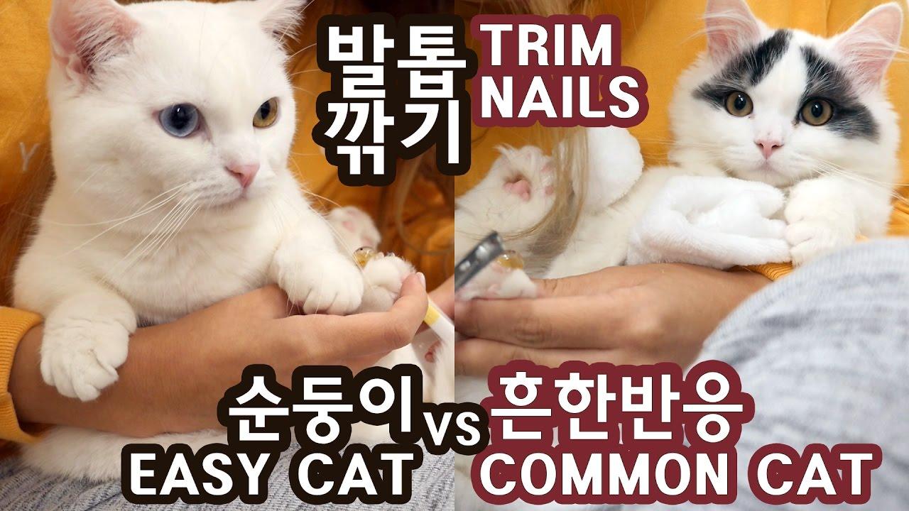 고양이 발톱깎기: 순둥이 vs 보통반응 CAT NAIL TRIMMING: EASY KITTY vs COMMON REACTION