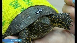 Краснокнижная болотная черепаха выжила после наезда автомобиля ДО24