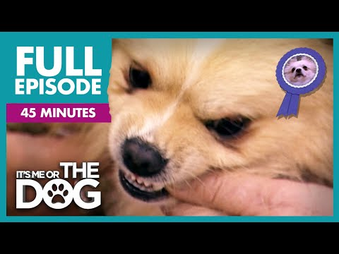 The Show Dog That Bites The Judges: Rocky and More | Full Episode | It's Me or the Dog