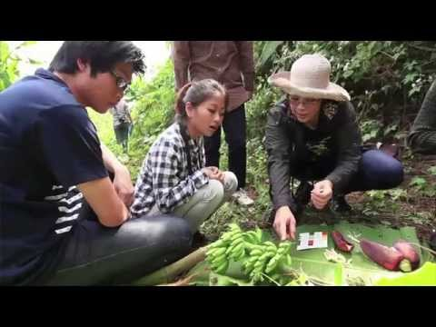[Clip] DeScience : จัดเต็ม!! ตามติดทีมวิจัยมหิดลไปสำรวจกล้วยป่า