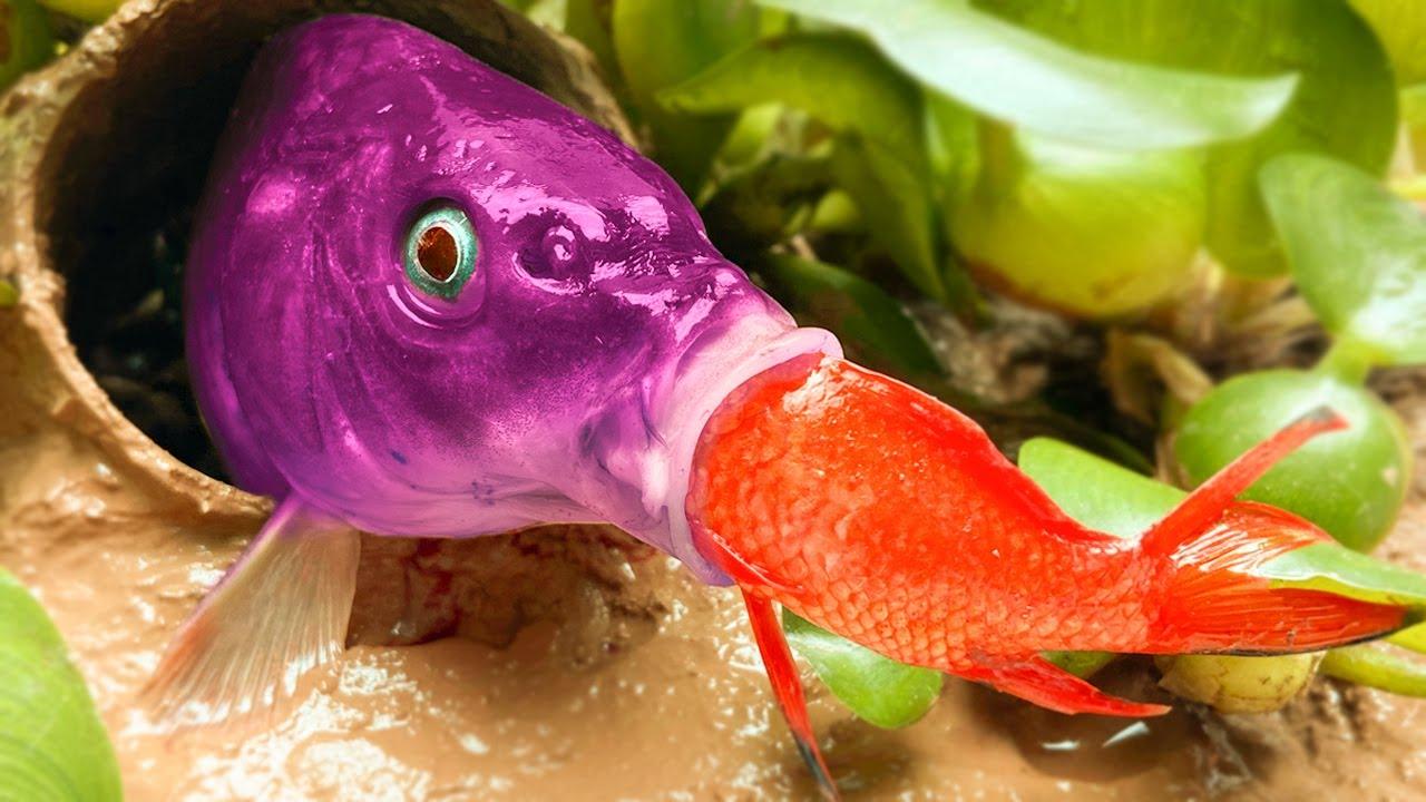 노란색 잉어 사냥 작은 물고기 카/ 이상한 요리를 먹기위한 도전 : 장어, 메기 Funny Video 스톱 모션 요리 Stop Motion Cooking ASMR