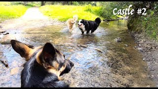 Castle Rock #2 Hiking with German Shepherd Hiking with a Dog 2 of 4