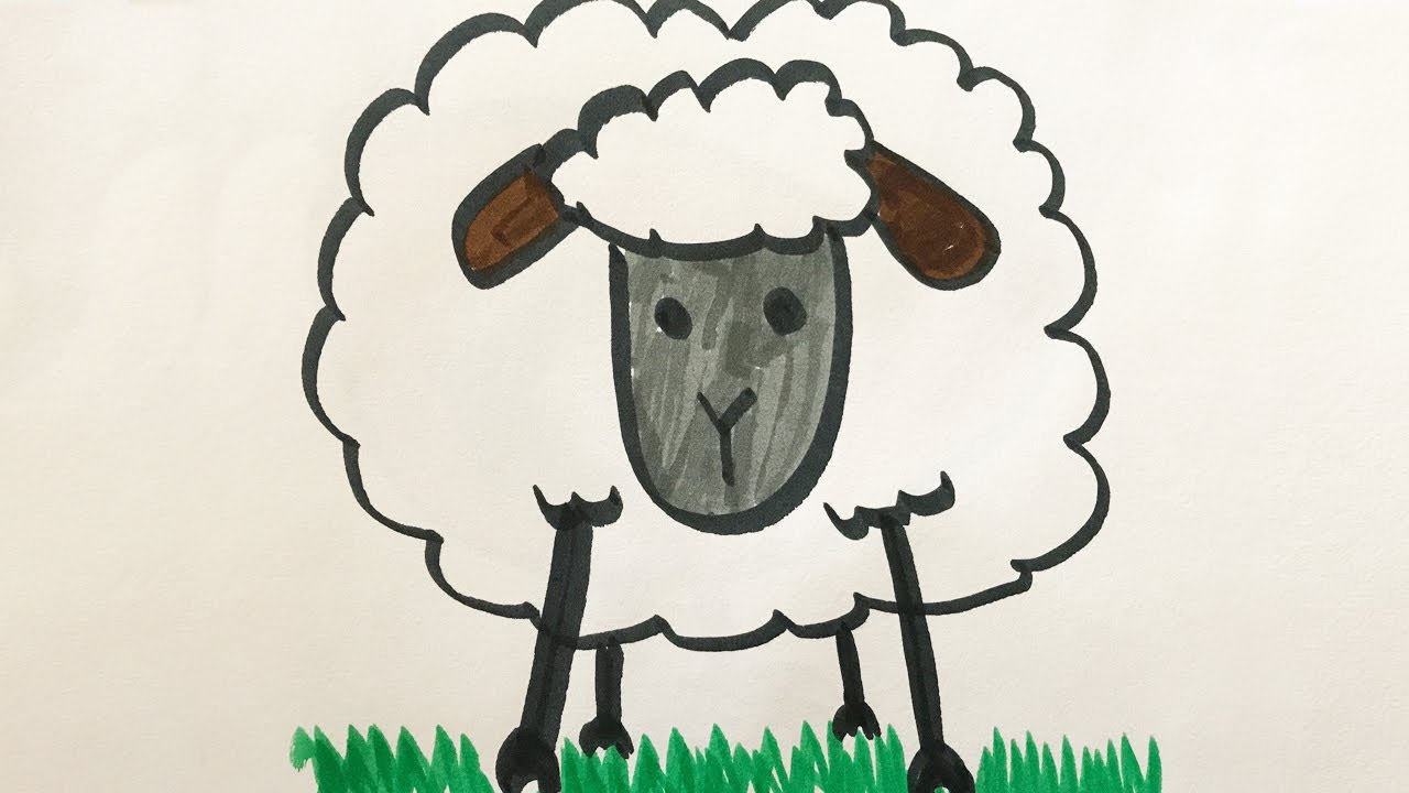 how to draw and color a lamb for kids youtube