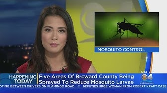 Broward To Spray Parts Of County For Mosquitoes