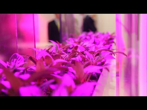 [Fast Forward Science 2015] : LEDs im Gartenbau: die stille Revolution - SciTech | das Wiss.-Magazin