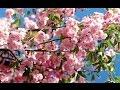 Download SPRING Concerto for Flute and 2 Violins in G major