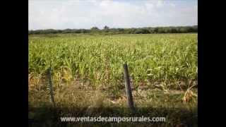 01 - Campo agrícola ganadero en venta 800 has - Santiago del Estero