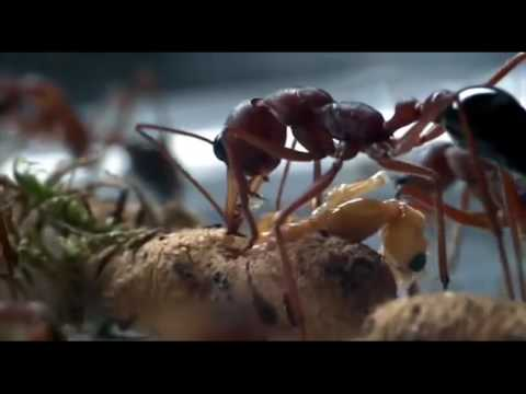 10 Hours of Ants Marching