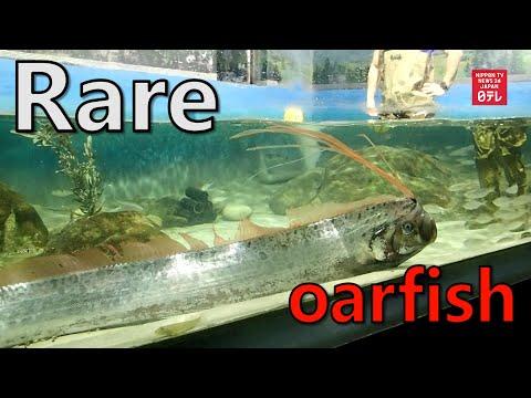 Deep Sea Fish Captured Alive