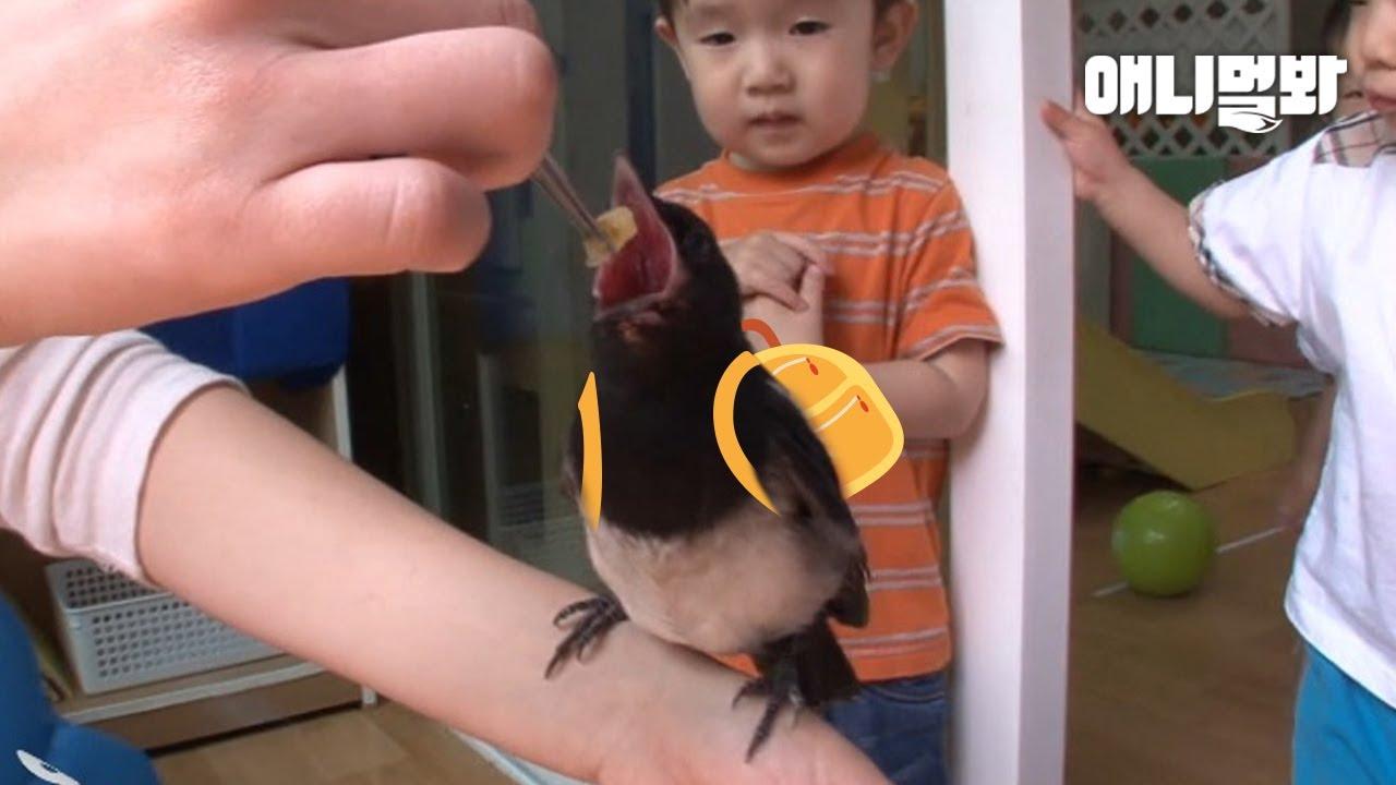피치못할 사정으로 어린이집에 다니게 된 아기 까치.. 그런데 엄마까치가 나타났다ㅣBaby Magpie Gets Admitted To Kindergarten