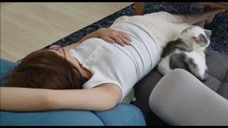 寝てる妊婦ママを3匹で囲んで護衛する猫たち