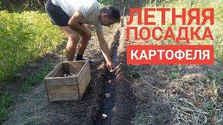 видео Выращивание картофеля двух урожаев в год