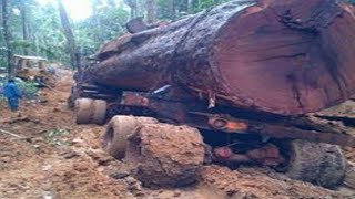 Big truck driving skills carrying Wood Logging in the forest, Biggest Operator Fast Logging Truck