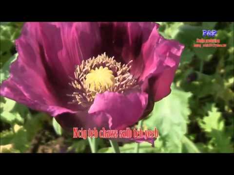 Kuv Pom Paj Yeeb Ntsha thumbnail