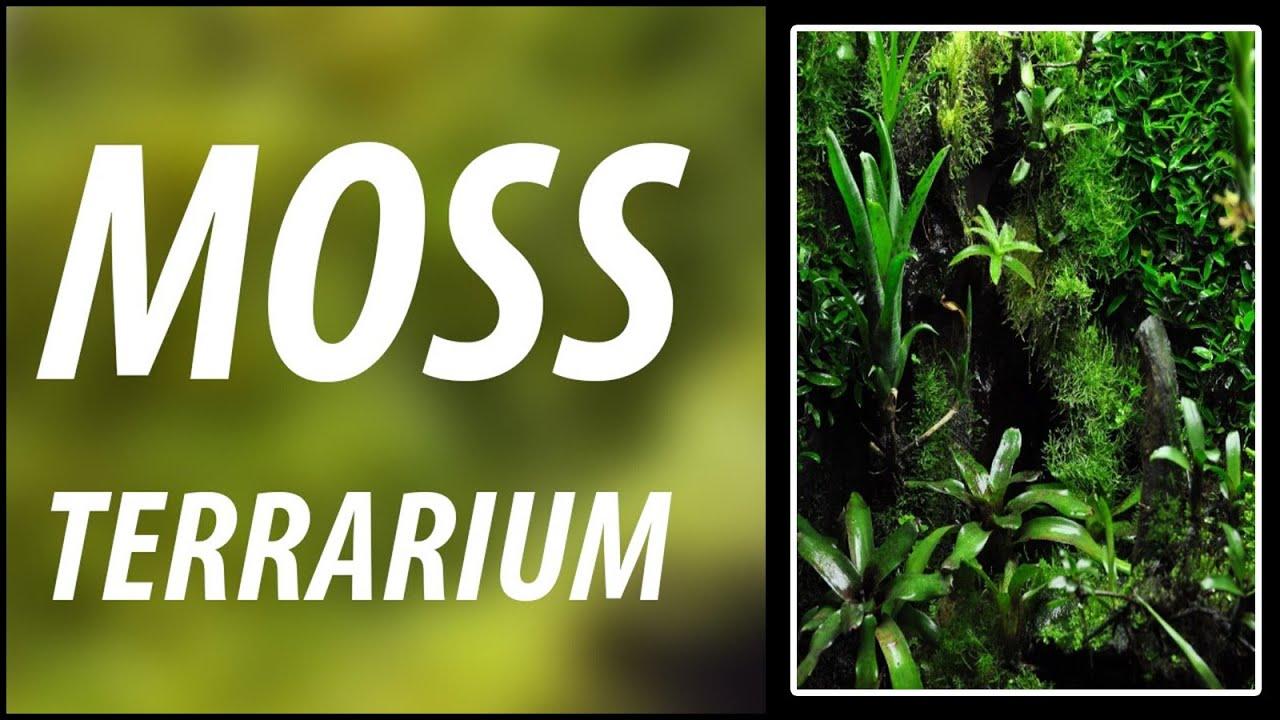 Faire pousser de la mousse dans un terrarium youtube - Faire pousser des endives ...