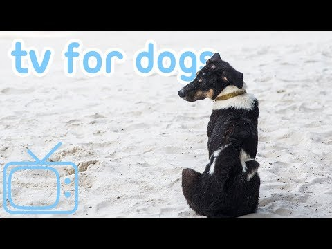 NEW Dog TV! Entertaining Beach Walk TV to Chill Your Dog! 2019!
