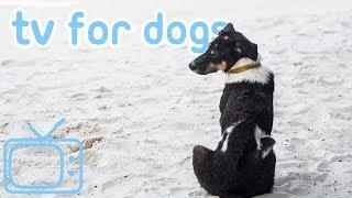 NEW Dog TV! Entertaining Beach Walk TV to Chill Your Dog! 2019!