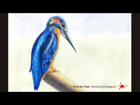 HOW TO DRAW A KINGFISHER WITH COLOR PENCILS - Narrated