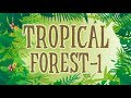 Types of Forests for Kids | Tropical Forest | Animation Learning Videos for Children