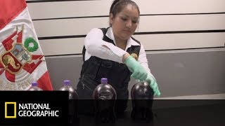 Para z Meksyku przemycała butelki z płynną kokainą! [Alarm na lotnisku]