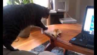 Жесть! Кошка и банан, бой века!