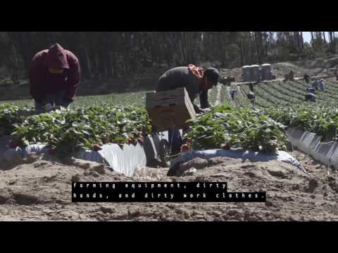 Pesticide Safety for Agricultural Workers (Closed Captioned)