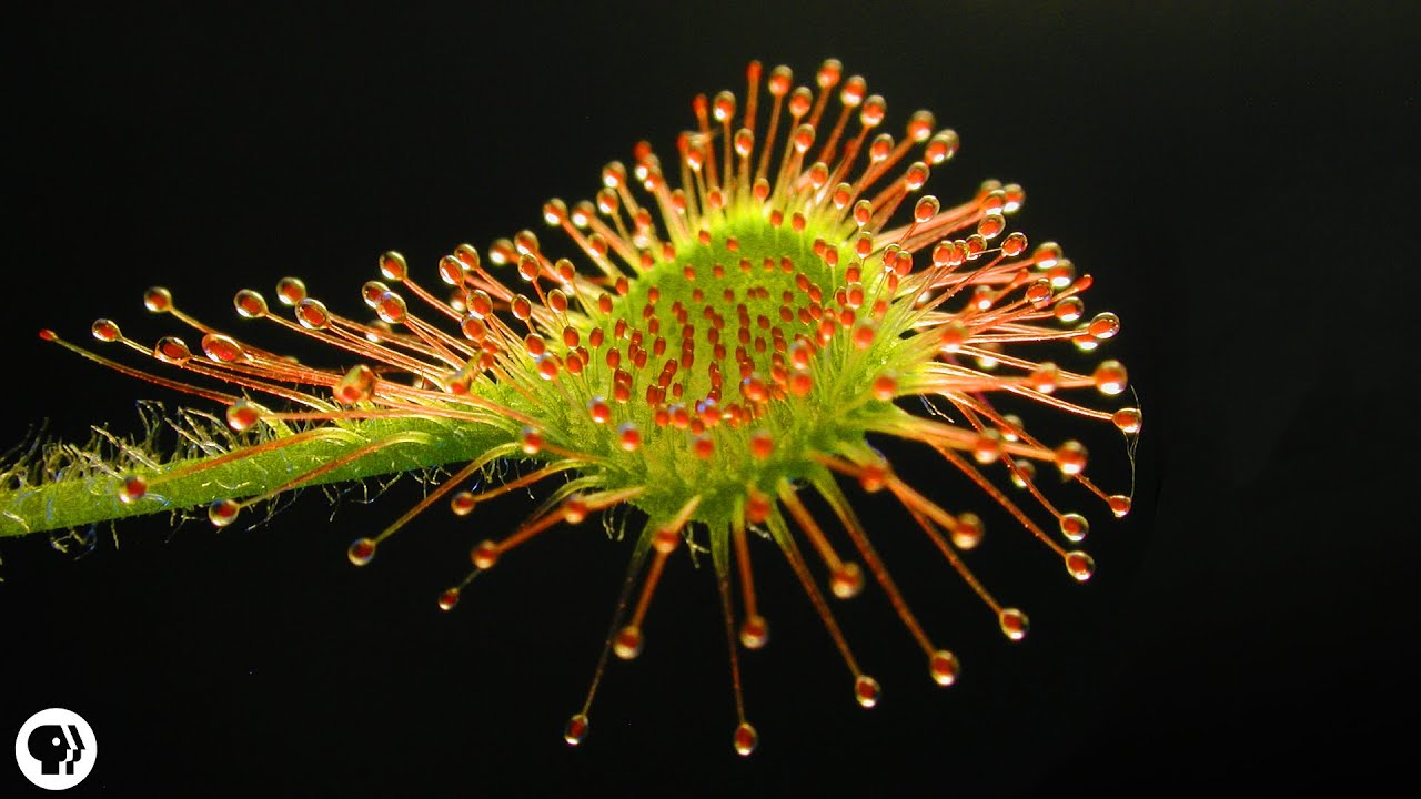 search carnivorous plant photos autos post