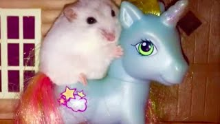 Happy Hamster riding a My Little Pony!